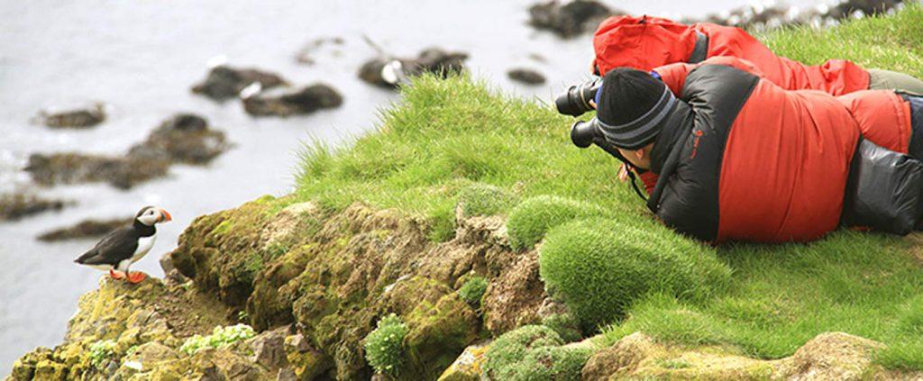 Aves Islandia