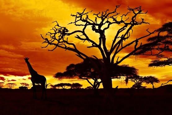 Kenia Años Luz