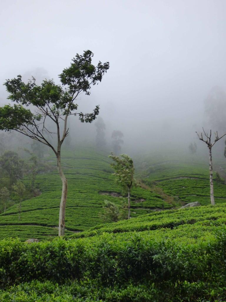 Paisaje verde oculto tras la niebla