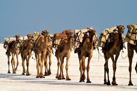 transporte de sal en Etiopía